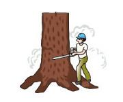 タヒボの製造工程-伐採