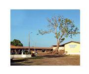 タヒボの製造工程-タヒボ現地工場