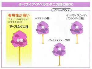 タベブイア・アベラネダエの類似樹木